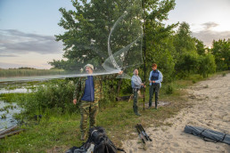 The team setting up nets for bat catching. Pripiat-Stokhid National Park in the Polesie area, Ukraine. © Daniel Rosengren