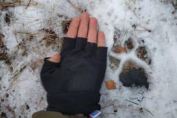 Maksim Belotsky showing a wolf footprint. © Maksim Belotsky